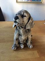 Hund Welpe 2