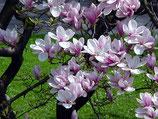 Kundalini * Engel-Ki, * Flora - Lebenskraft & Lebensfreude
