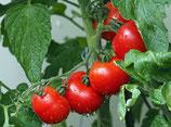 Tomaten, verschiedene Sorten, kg