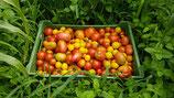Bio-Tomaten im Mix,  kg