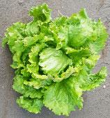 Bio-Salat knackig, Stück