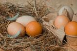 Bio-Eier von der Gleiner Berghenne