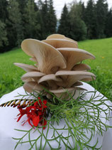 Frisch Bio-Austernpilze, zirka 200g