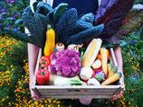 Bio-Gemüse der Saison