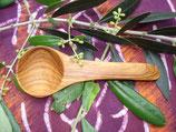 オリーブ木 丸スパイス中11cm