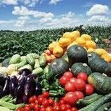 規格外有機野菜(10kg)セット