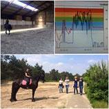 Module 11 Trainingsfysiologie of Optimaal presteren paard mbv hartslagmeter