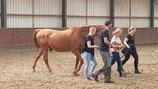Module 06 Horse Awareness