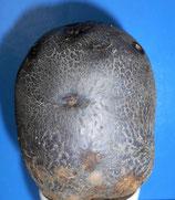 Blaue Elise (Violetta)/Trüffelkartoffeln