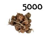 5 000 bulbos calibre 8-9