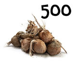 500 bulbos calibre 10-11