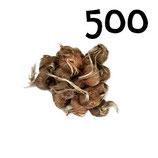 500 bulbos calibre 8-9