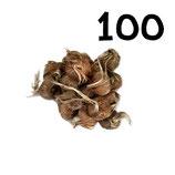100 bulbos calibre 8-9