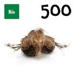 500 bulbos bio calibre 8-9
