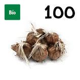 100 bulbos bio calibre 9-10