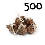 500 bulbos calibre 7-8