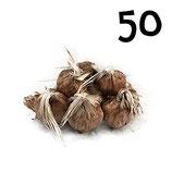 50 bulbos calibre 7-8