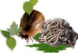 Zecken/Flohschutz und Wurmkuren