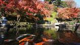 英語で楽しませる、鎌倉ツアーまち歩き研修