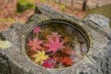 禅と日本文化 第3回 4月20日(火)