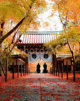 【長期優待】「禅と日本文化」第1回3月16日
