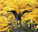 11月14日(木)日比谷公園ウォーク研修