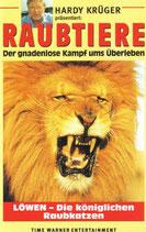 Löwen, die königlichen Raubkatzen