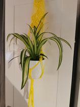 Blumenampel in gelb