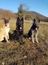 pension 3 chiens /jour