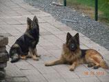 pension 2 chiens /jour