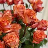 """Ein Duzend Rosen """"Twilight"""""""