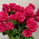 """Ein Duzend Rosen """"Gotcha"""""""