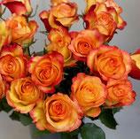 """Ein Duzend Rosen """"Billonaire"""""""