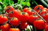 Tomatenpurre