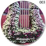 Notenschlüssel aus Blüten