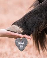 Haaranalyse Organe Hund/Katze/Pferd
