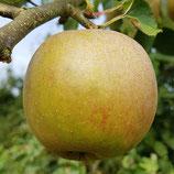 Appel Boskoop  / goudreinette - 1 kg