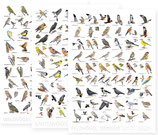 Vogelposter 3er Set + vogelfreundlicher Spezialitätenkaffee