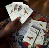 Kartenspiel: Vögel Europas