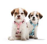 Geschirr Vario Ypsilon Puppy