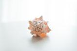 Pink Murex * Herzenswärme * ca 10 cm