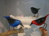 Vogel auf Draht, 2-farbig