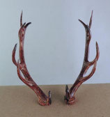 1 paire de corne pour coucou chasseur - tête de cerf