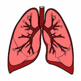 Bronches, nez et toux Infusion bio