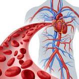 Circulation sanguine contre les varices Infusion bio