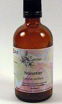 Noisetier Coudrier