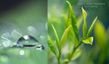 Jade Fragranza d'Ambiente