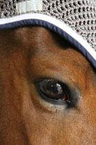 Lorient Bonnet cheval Spring 20 - Harcour