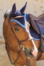 Bonnet de cheval Diamant Rider Marine - Galon bleu élec - Cord blanche - Harcour