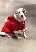Manteau chien Noel